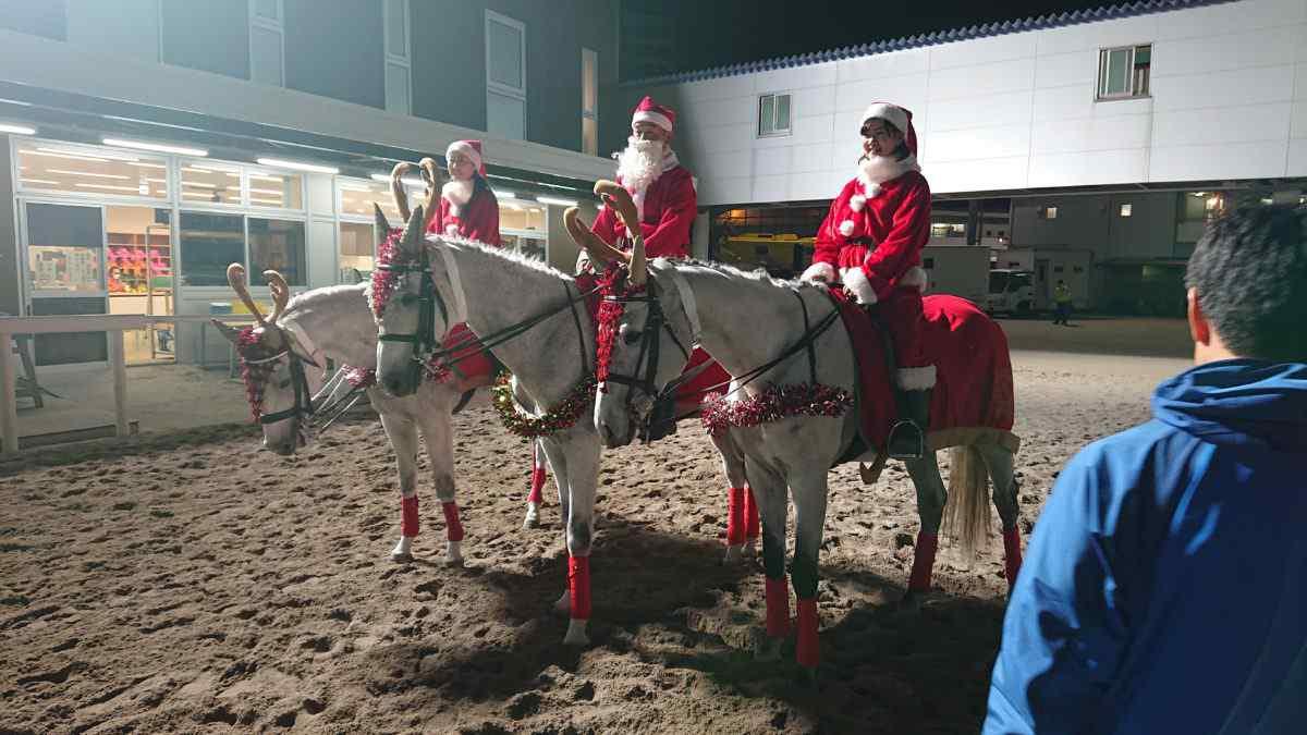 ホワイトクリスマス賞の誘導馬