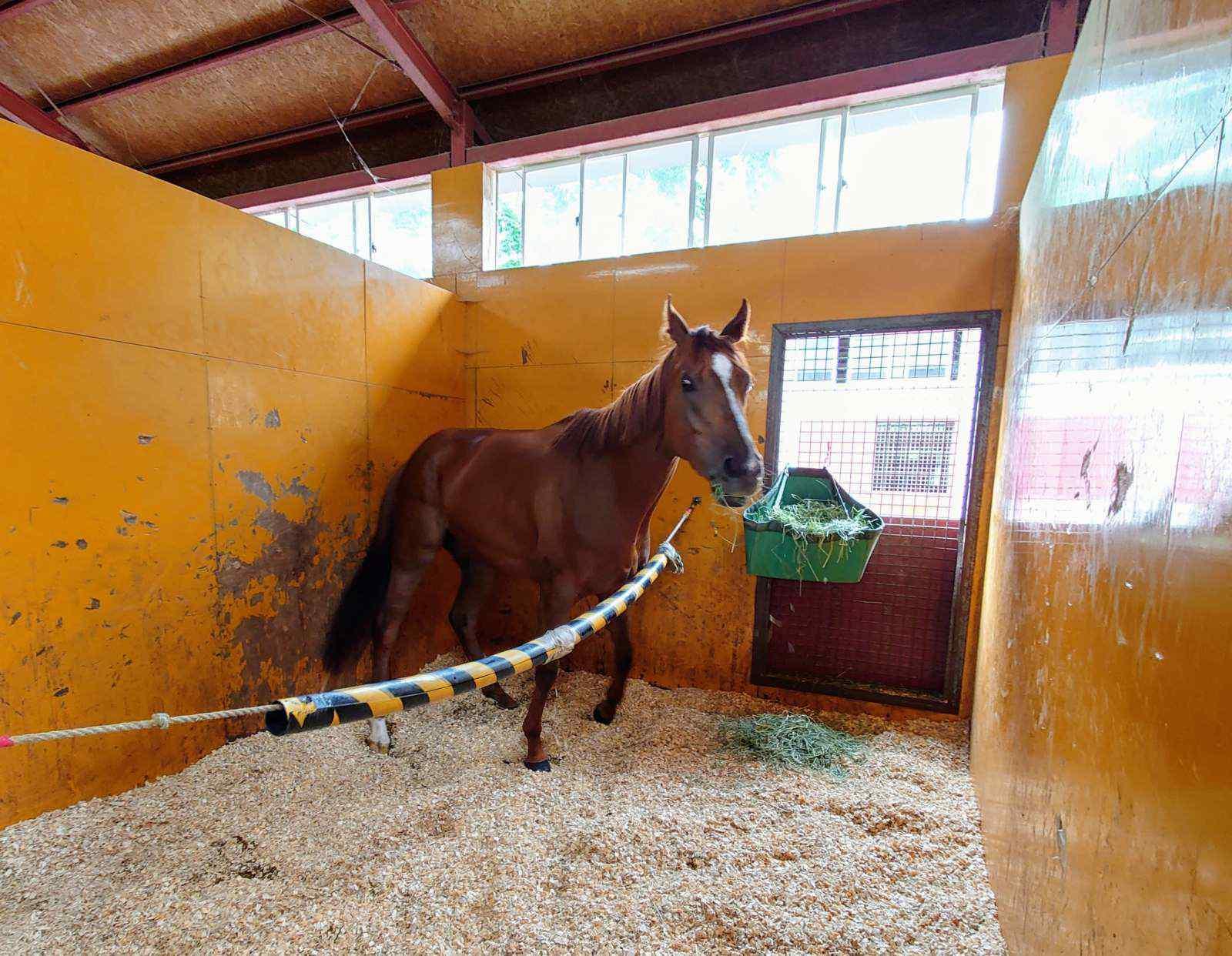 シトリンちゃん2020年7月 馬房