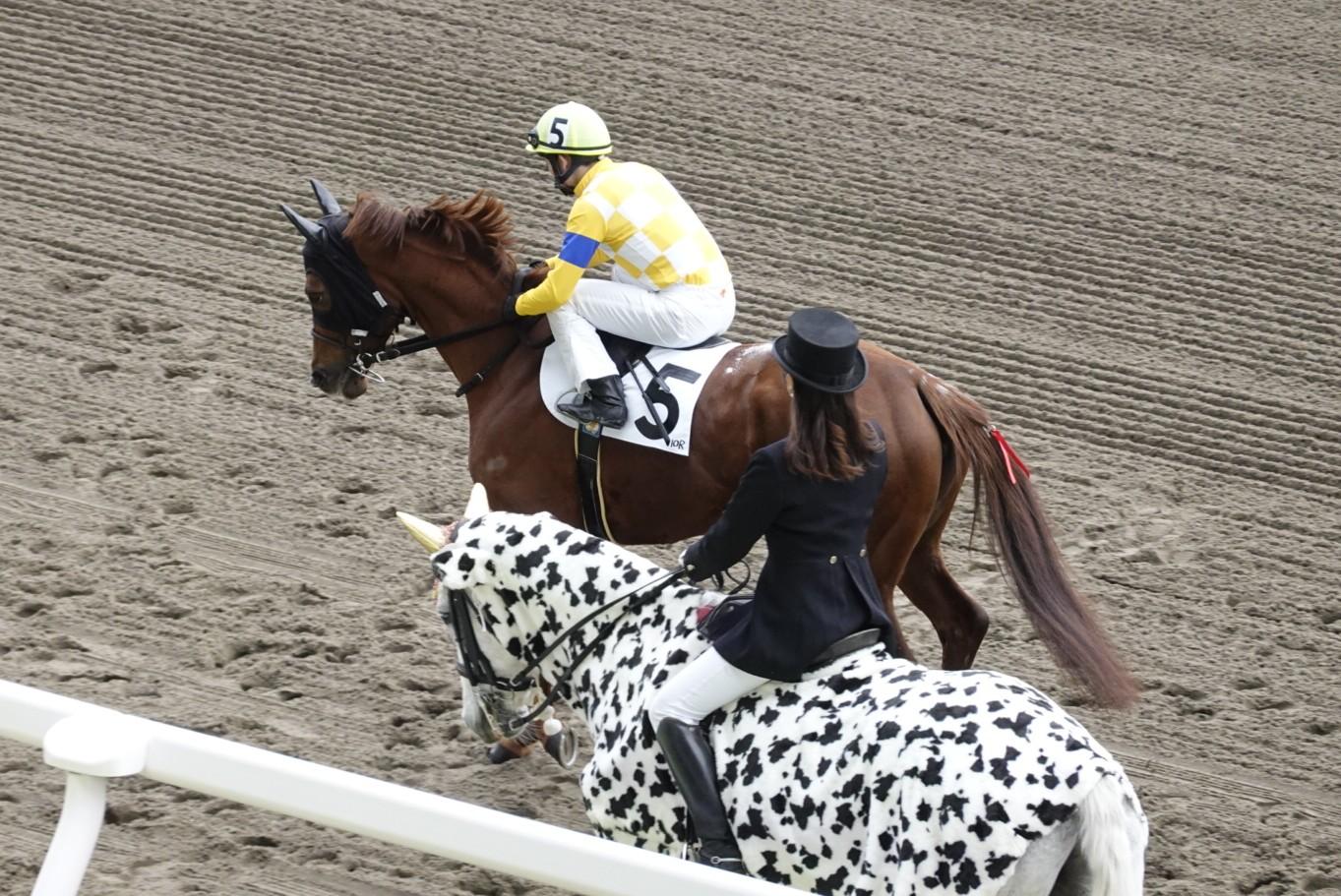 シトリンちゃんと誘導馬
